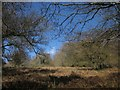 SX8179 : Clearing, Furzeleigh Plantation by Derek Harper