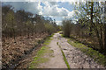 SJ7486 : An unmade path at Dunham Massey by Ian Greig