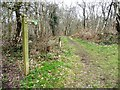 SJ8148 : Waymarked Woodland Trail, Watermills Wood by Christine Johnstone