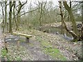 SJ8148 : One of the entrances to Watermills Wood by Christine Johnstone