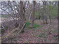 TL8413 : Western Boundary of Shut Heath Wood, Little Braxted by Roger Jones