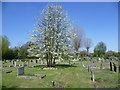 TQ2367 : Blossom in Morden Cemetery by Ian Yarham