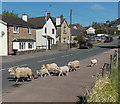 SO6005 : Sheep cross High Street, Bream by John Grayson