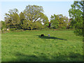 TL7804 : Dell Meadow (Nature Reserve), Danbury by Roger Jones