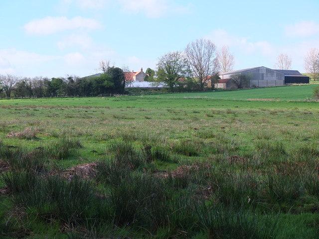 Hollin Hill Bogs