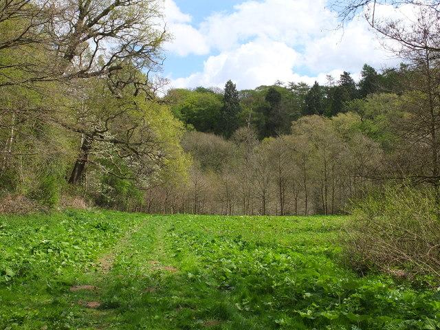 Temple Bank Wood
