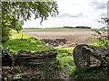 TL5153 : Lodge Farm Fields by Kim Fyson