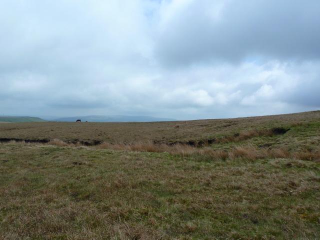 Haslingden Moor