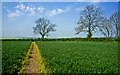 TL1481 : Footpath south east of Steeple Gidding by Kim Fyson