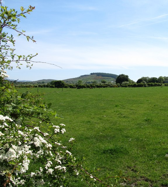 Grassland south of the Newry Road