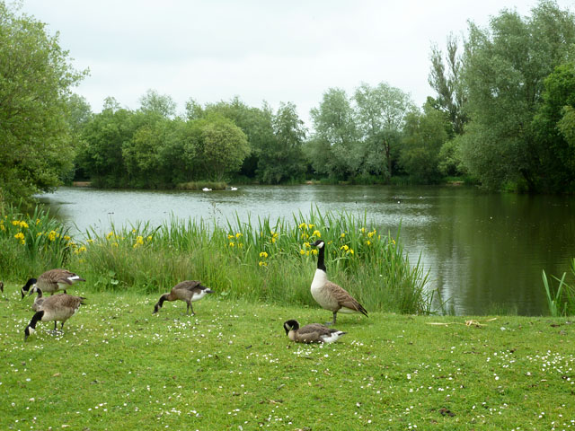 Fishing lake near birds green robin webster cc by sa 2 0 for Nearest fishing lake