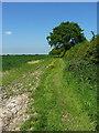 SJ8159 : A fieldside footpath by Richard Law