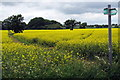 SP8825 : Footpath to Stewkley by Philip Jeffrey