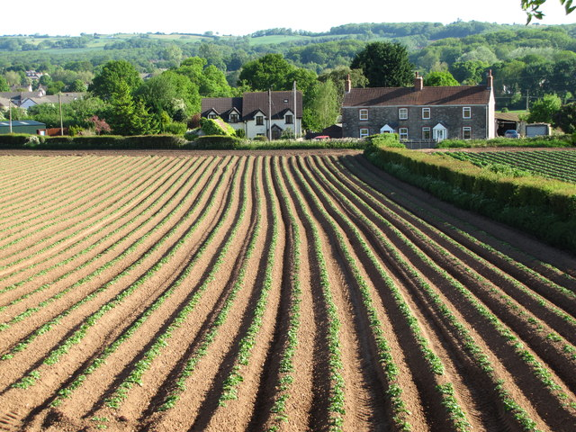 Crop Fields Near Caerwent Quarry