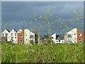 ST3287 : Alexandra Gate Housing, Newport : Week 25