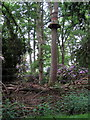 SP9634 : Tree platforms for going ape on by Philip Jeffrey