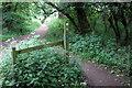 TL0638 : Greensand Ridge Walk in Maulden Wood by Philip Jeffrey