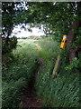 TL0340 : Marston Vale Trail towards Field Farm by Philip Jeffrey