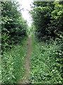 SP9343 : Milton Keynes Boundary Walk along Shire Lane by Philip Jeffrey