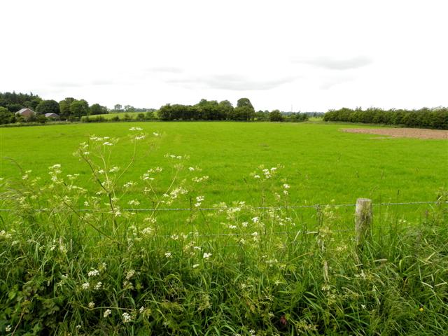 A Nice Green Field, Ballyhallagan © Kenneth Allen