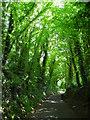 SJ5971 : Mill Lane, Cuddington by John Topping