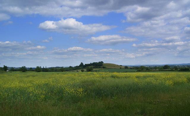 Knole Hill near Long Sutton