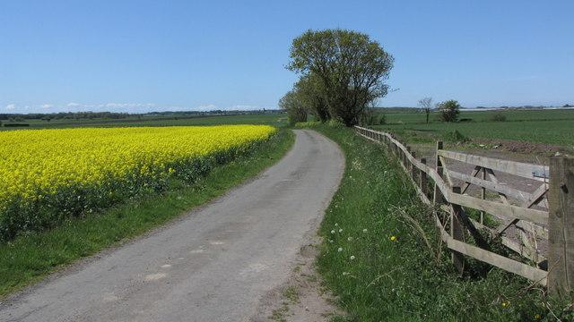 Perhaps it should be Yellow Lane?