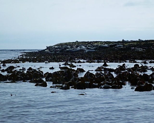Seals and seaweed