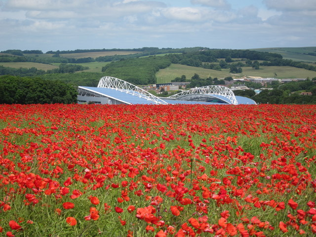 Poppies and the Amex Stadium, Falmer