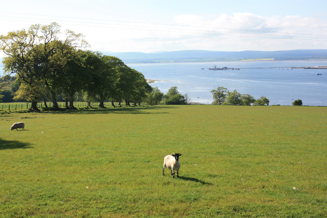 Towards Cromarty village