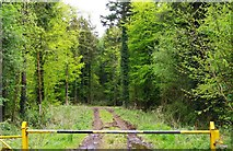 R3977 : Track in wood, near Finanagh, Co. Clare by P L Chadwick