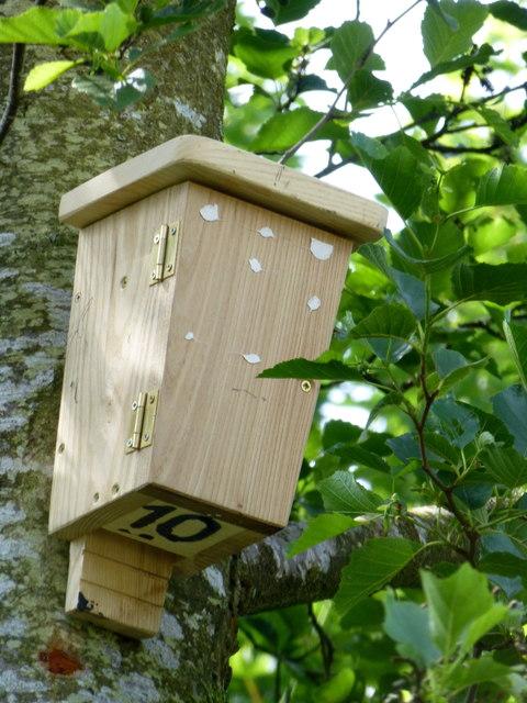 Bat box no 10 mullaghmore kenneth allen cc by sa 2 0 for Bat box obi