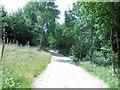 TQ3929 : Path through Birchgrove Wood by Paul Gillett