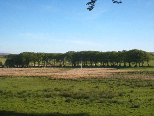 Row of trees near Lower Treblary