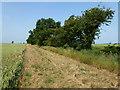 TL4895 : Wheatsheaf Drove near Christchurch by Richard Humphrey