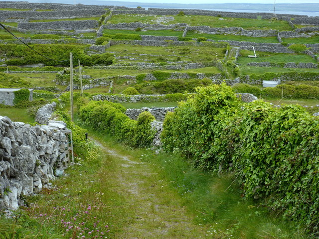 Eastern fields - Inis Oírr