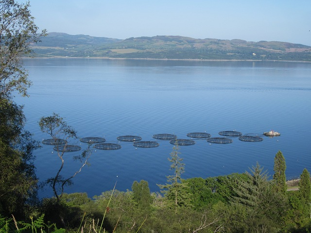 Fish farm on Loch Fyne