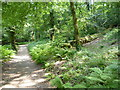SX0863 : Woodland path, Great Wood, Lanhydrock by Maurice D Budden