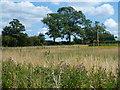 TL5184 : Mill Hill near Little Downham, Ely by Richard Humphrey