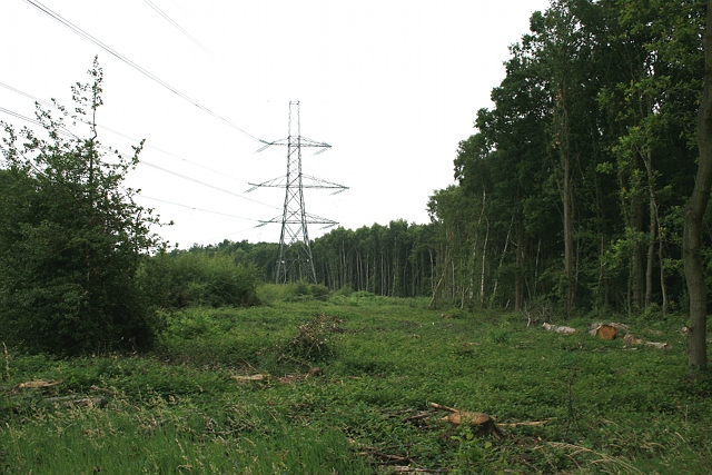 Electricity transmission line across Arbrook Common