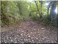ST6055 : Bridleway in Chewton Wood by James Ayres