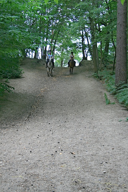 Horse riders on Esher Common