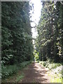TL1696 : Former carriage drive to Orton Hall by Peter Whatley
