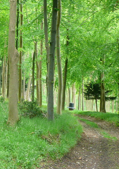 In Great Wood