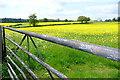 SU7986 : Late-flowering rape by Graham Horn