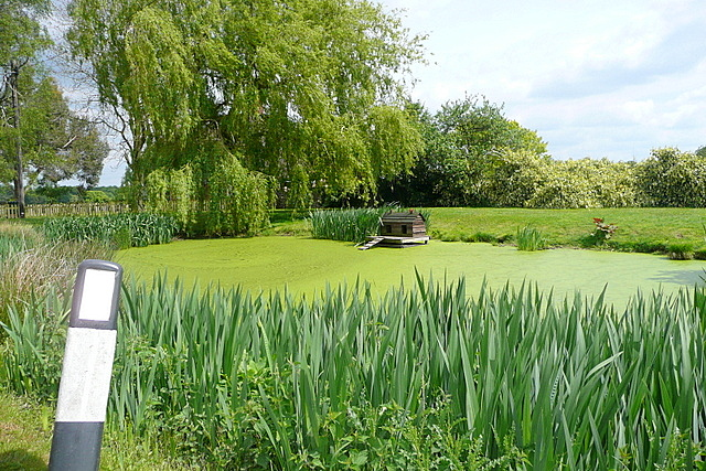 Rotten Row pond