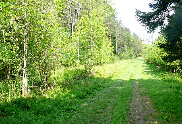 Track in Heath Wood