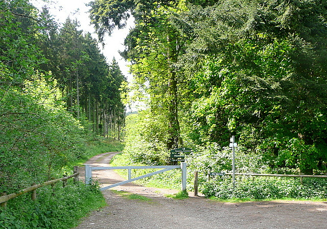 Track into Homefield Wood