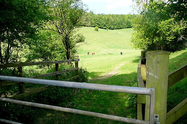 Footpath towards Marlow