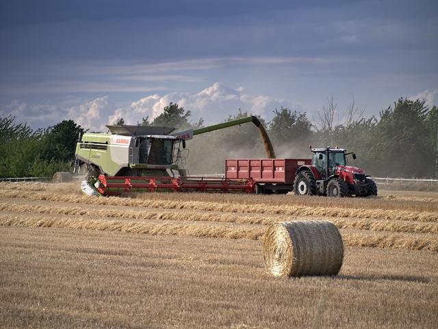 Harvest Time at Poplar Farm